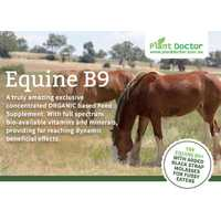Equine B9 PLUS Food Supplement